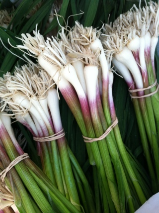 Green Garlic from Dancing Bear Farm (Leyden, MA)